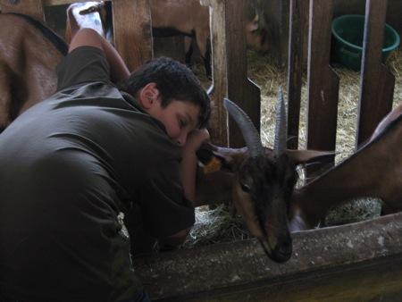 La chèvrerie du village, un contact direct avec les produits du terroir !